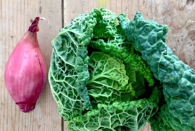 Ricette verdure bambini verza